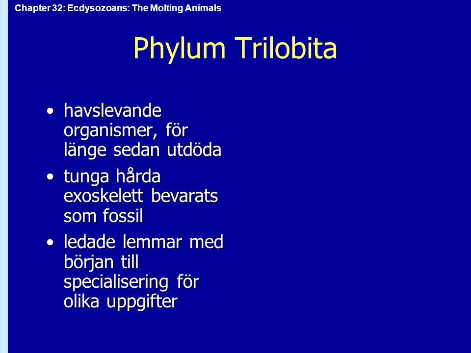 Phylum Trilobita havslevande organismer, för länge sedan utdöda