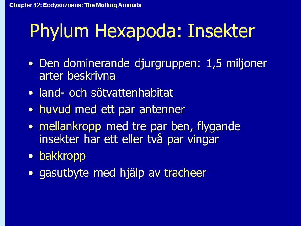 Phylum Hexapoda: Insekter