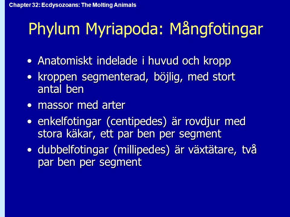 Phylum Myriapoda: Mångfotingar