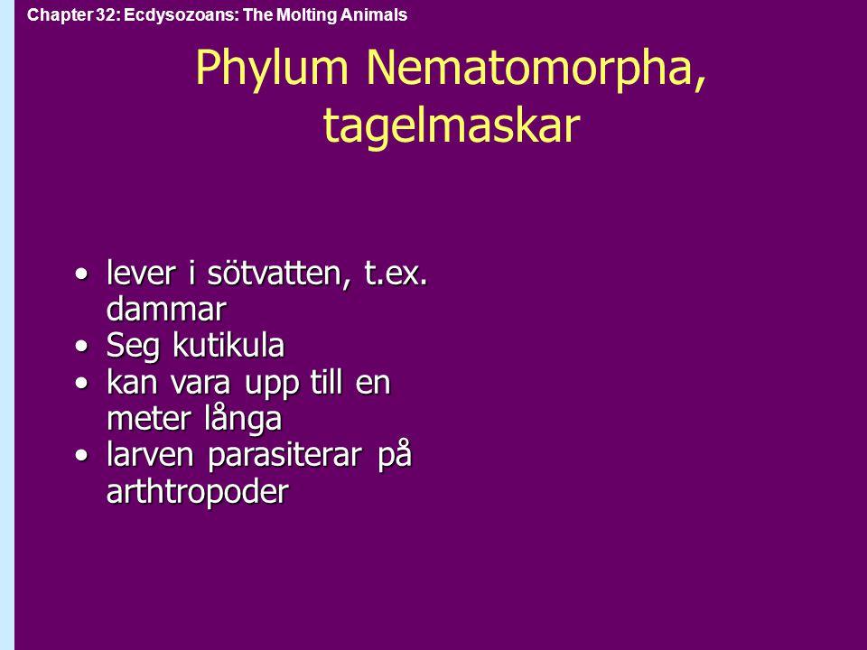 Phylum Nematomorpha, tagelmaskar