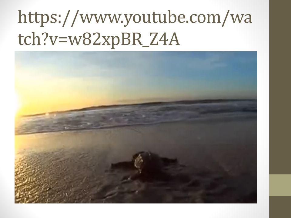 https://www.youtube.com/watch v=w82xpBR_Z4A