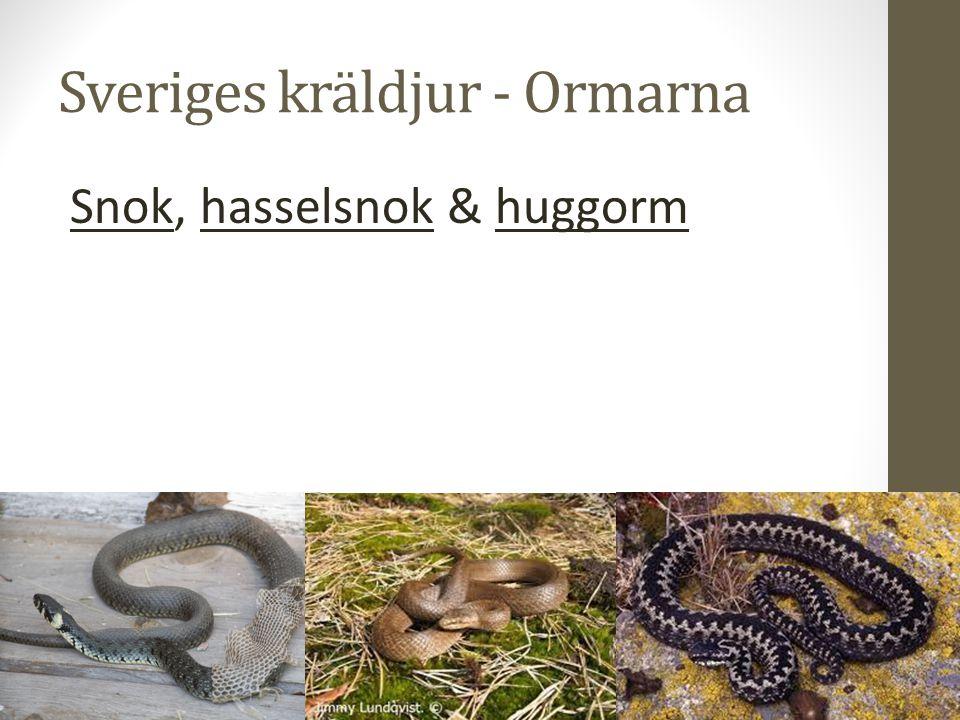 Sveriges kräldjur - Ormarna