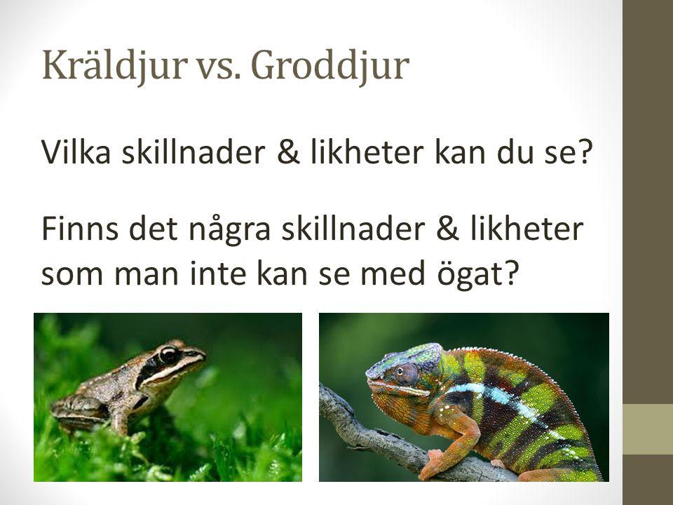 Kräldjur vs. Groddjur Vilka skillnader & likheter kan du se