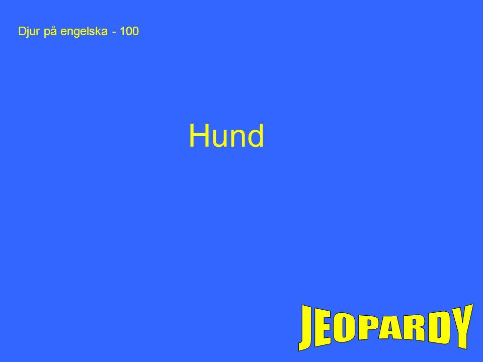 Djur på engelska - 100 Hund JEOPARDY