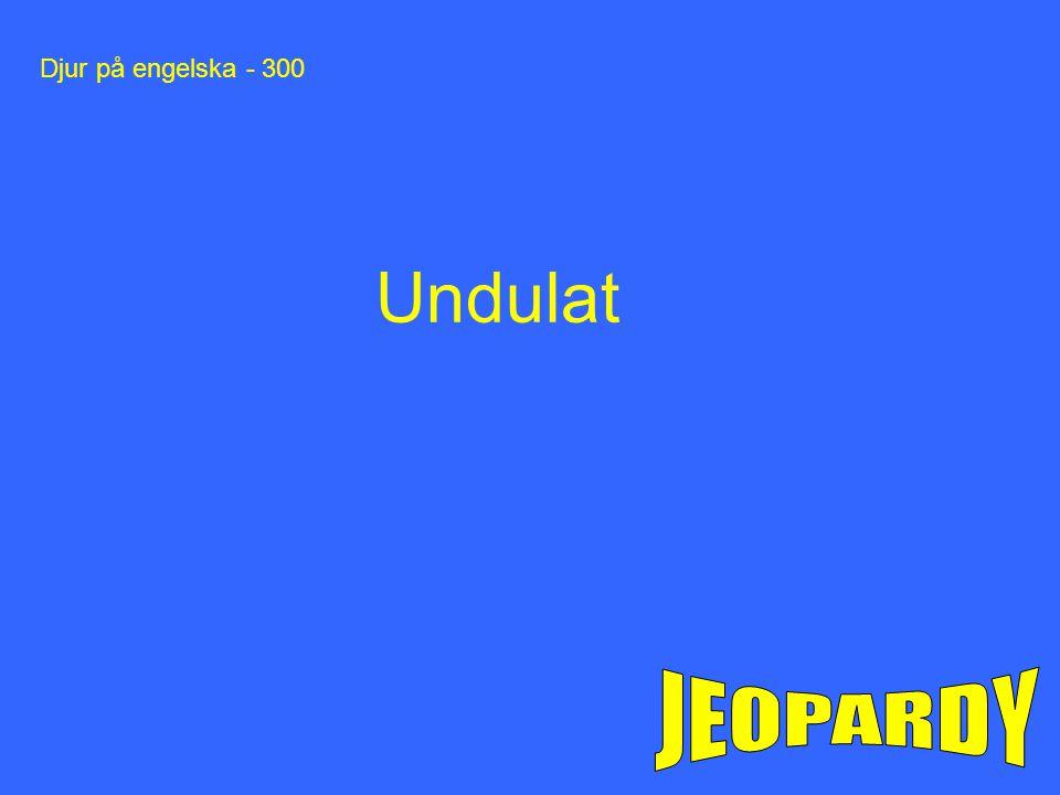 Djur på engelska - 300 Undulat JEOPARDY