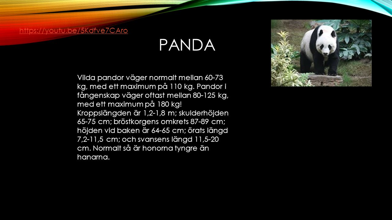 panda https://youtu.be/5Kdfve7CAro