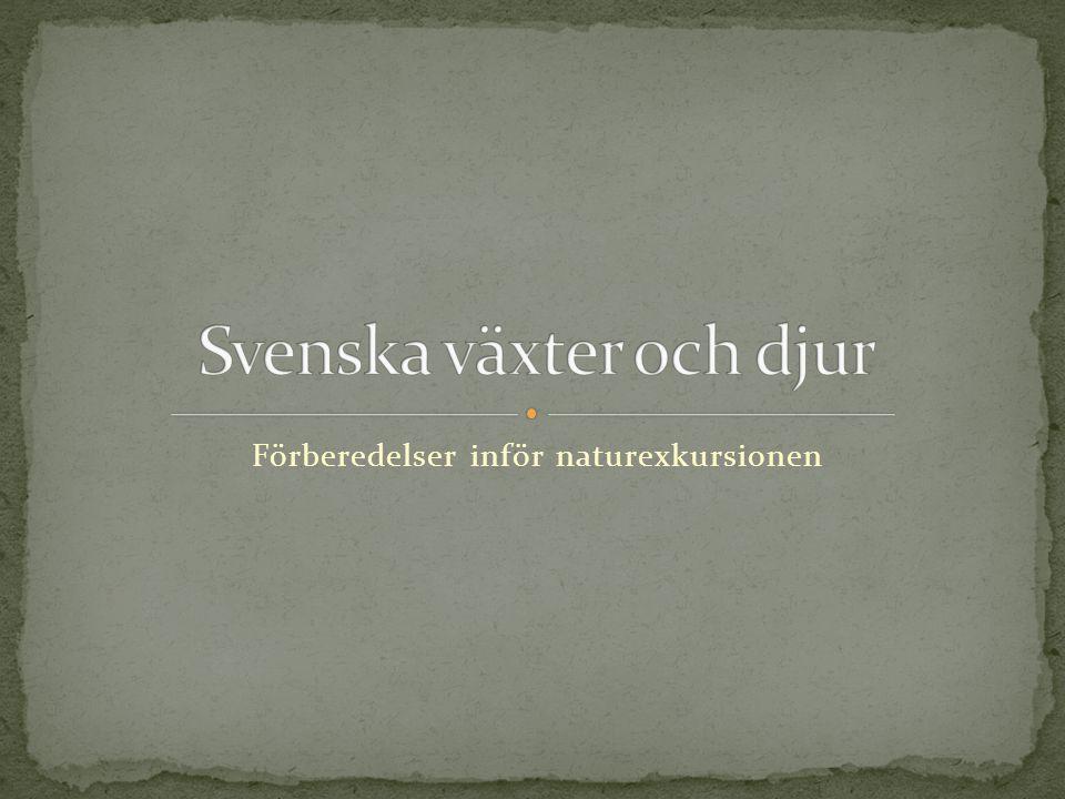 Svenska växter och djur