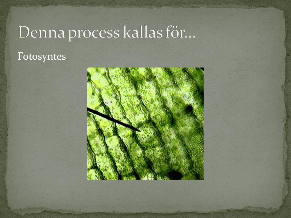 Denna process kallas för…