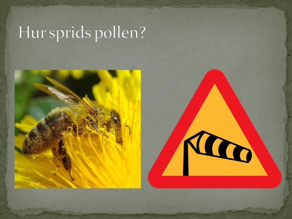 Hur sprids pollen