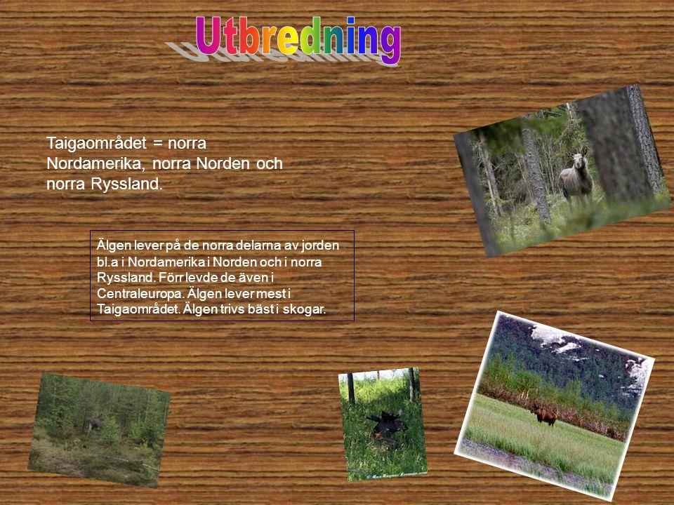 Utbredning Taigaområdet = norra Nordamerika, norra Norden och norra Ryssland.