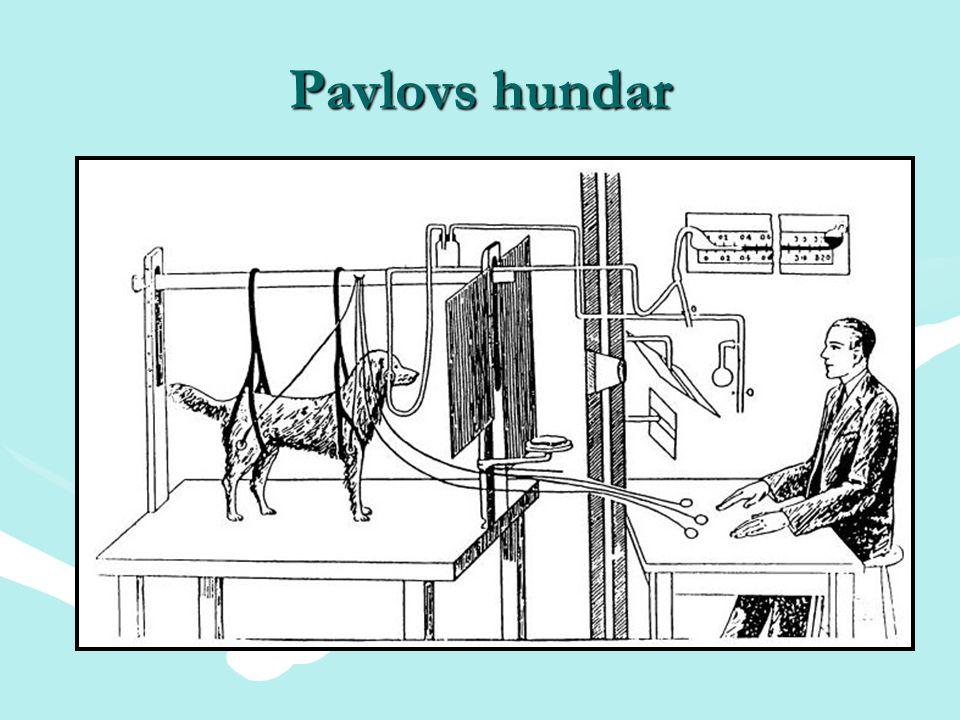 Pavlovs hundar