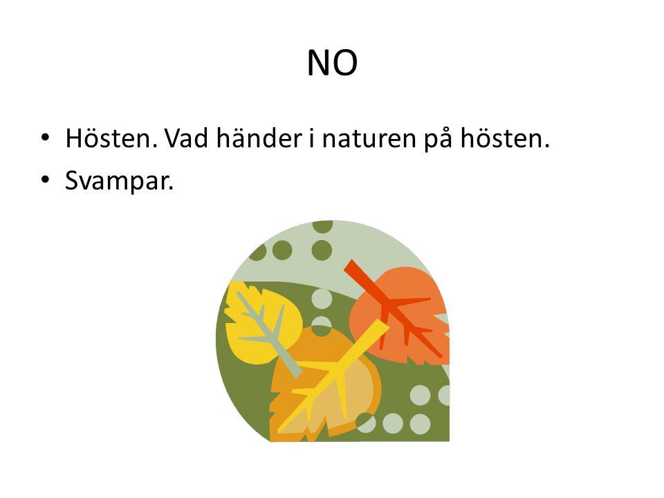 NO Hösten. Vad händer i naturen på hösten. Svampar.