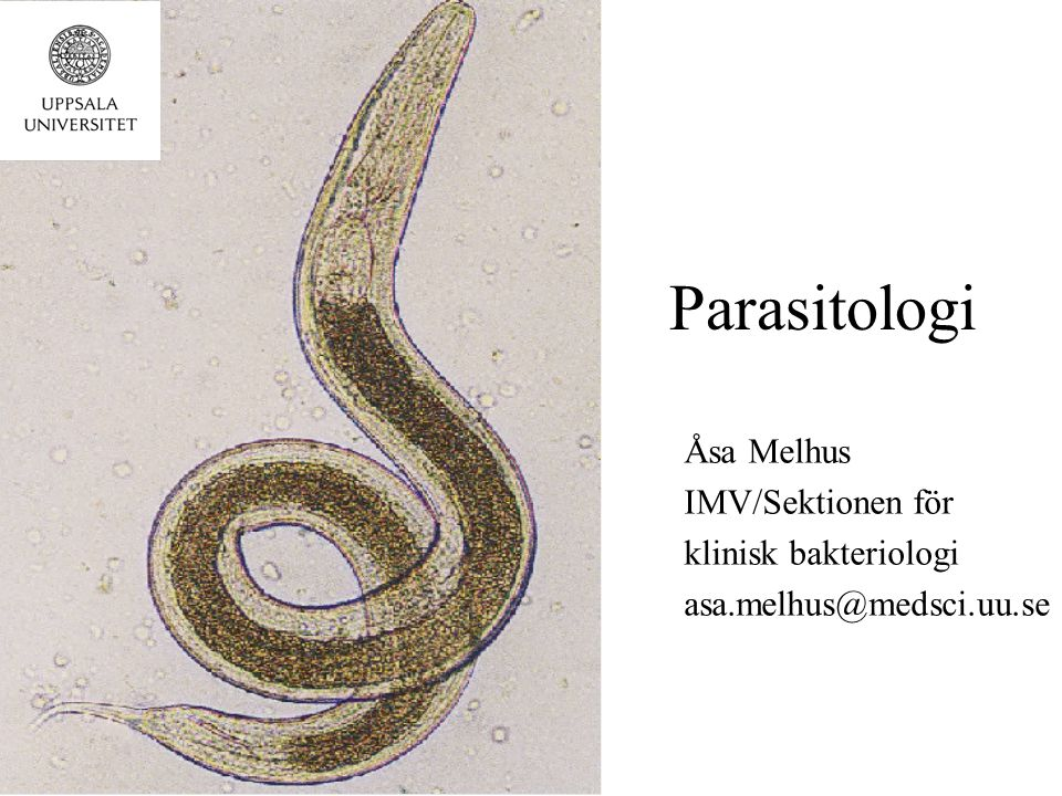 Parasitologi Åsa Melhus IMV/Sektionen för klinisk bakteriologi