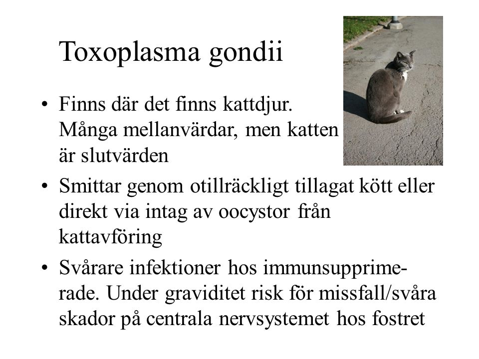 Toxoplasma gondii Finns där det finns kattdjur. Många mellanvärdar, men katten är slutvärden.