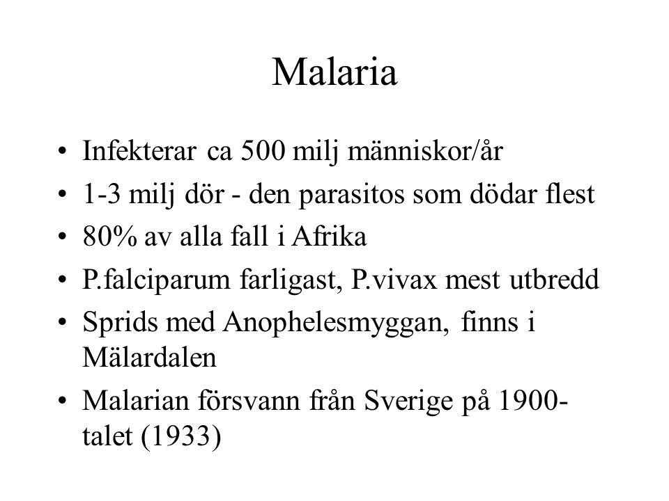 Malaria Infekterar ca 500 milj människor/år