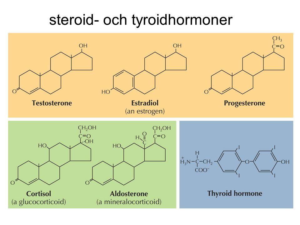 steroid- och tyroidhormoner