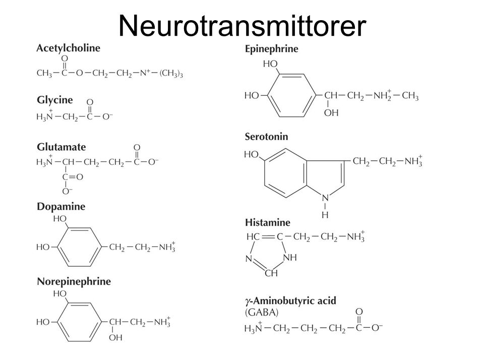 Neurotransmittorer Figures_Hi-res\ch13\cell3e13061.jpg
