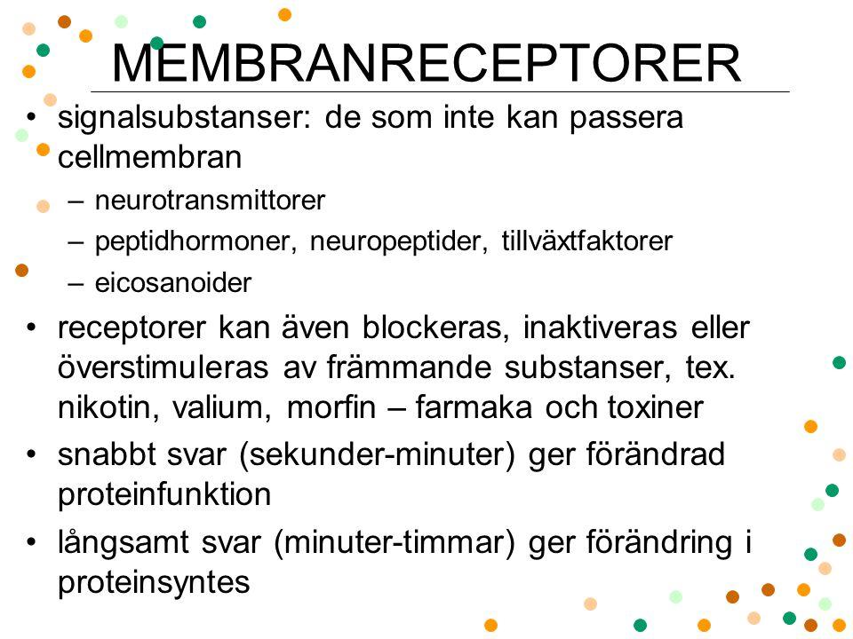 MEMBRANRECEPTORER signalsubstanser: de som inte kan passera cellmembran. neurotransmittorer. peptidhormoner, neuropeptider, tillväxtfaktorer.