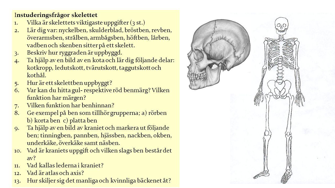 Instuderingsfrågor skelettet