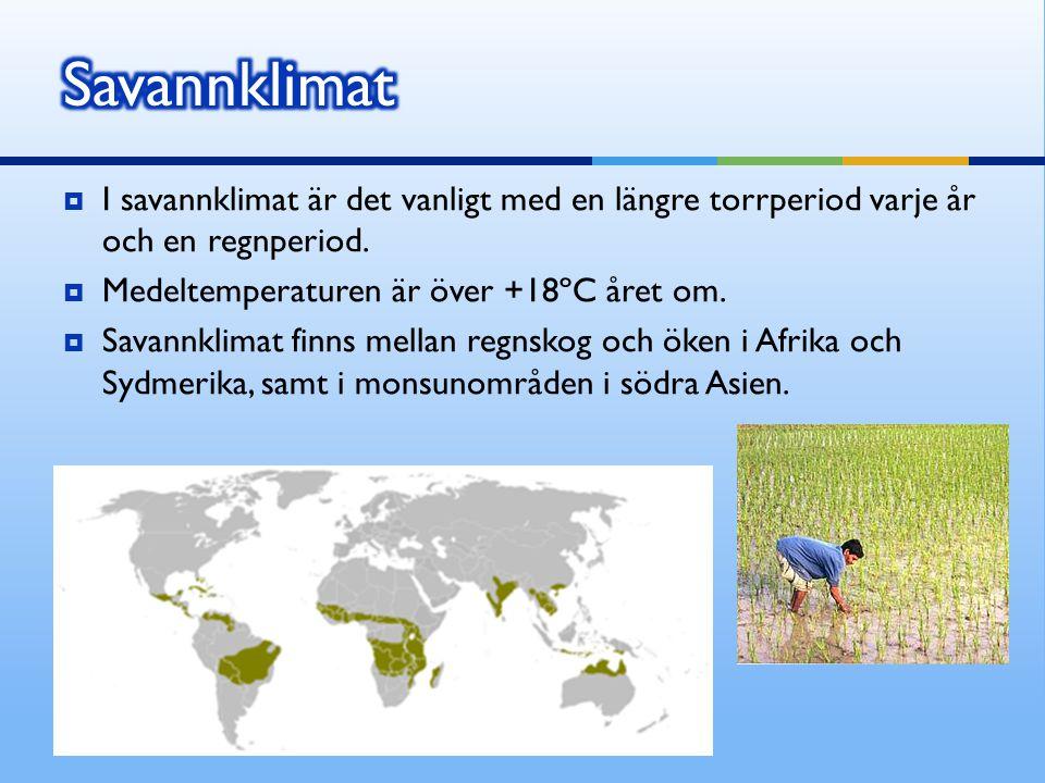 Savannklimat I savannklimat är det vanligt med en längre torrperiod varje år och en regnperiod. Medeltemperaturen är över +18ºC året om.