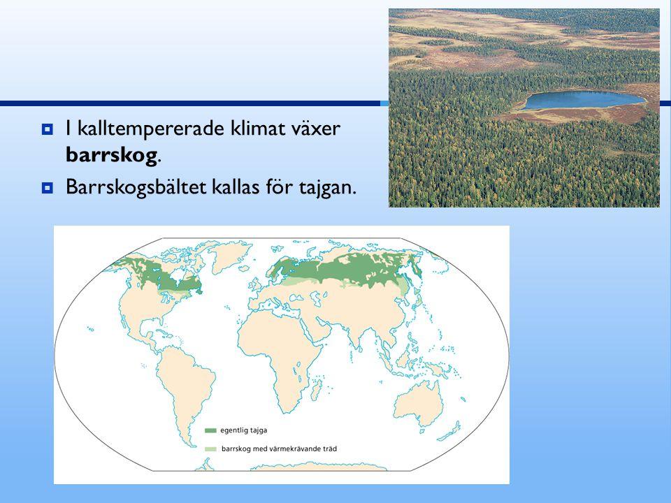 I kalltempererade klimat växer barrskog.