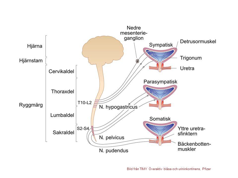 Bild från TIMY Överaktiv blåsa och urininkontinens, Pfizer