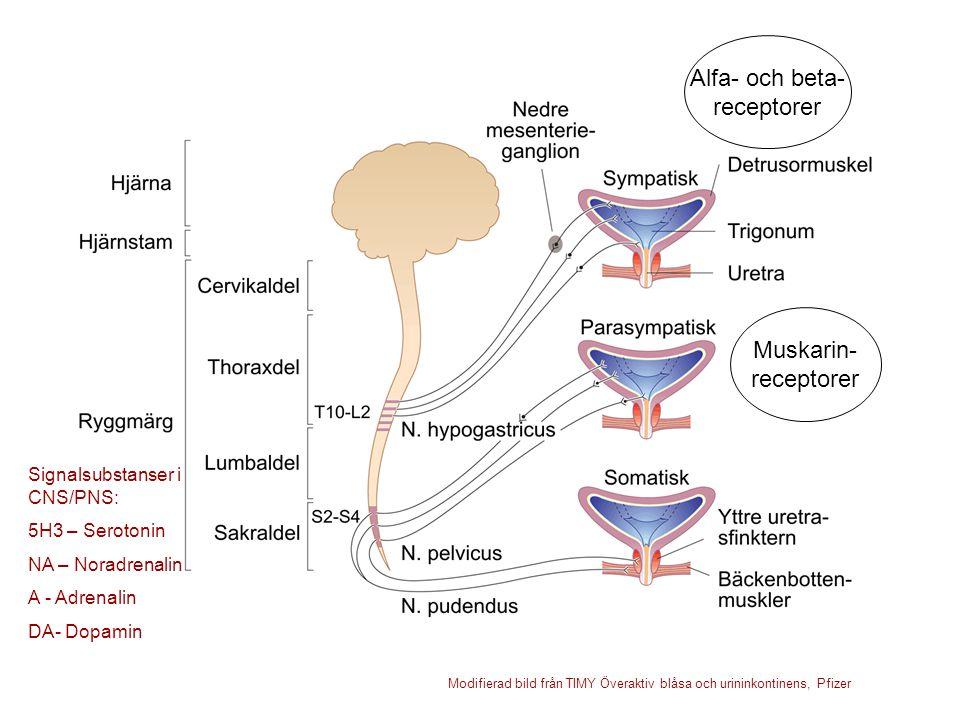 Alfa- och beta- receptorer Muskarin- receptorer