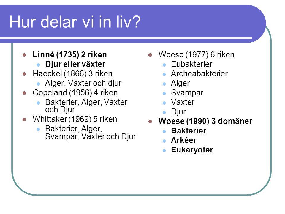 Hur delar vi in liv Linné (1735) 2 riken Djur eller växter