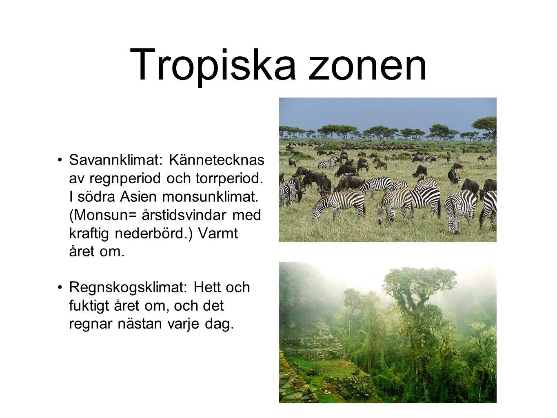 Tropiska zonen