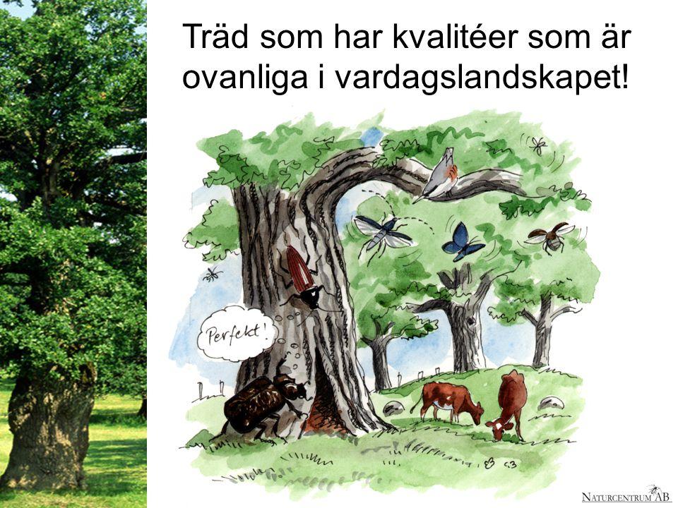 Träd som har kvalitéer som är ovanliga i vardagslandskapet!!