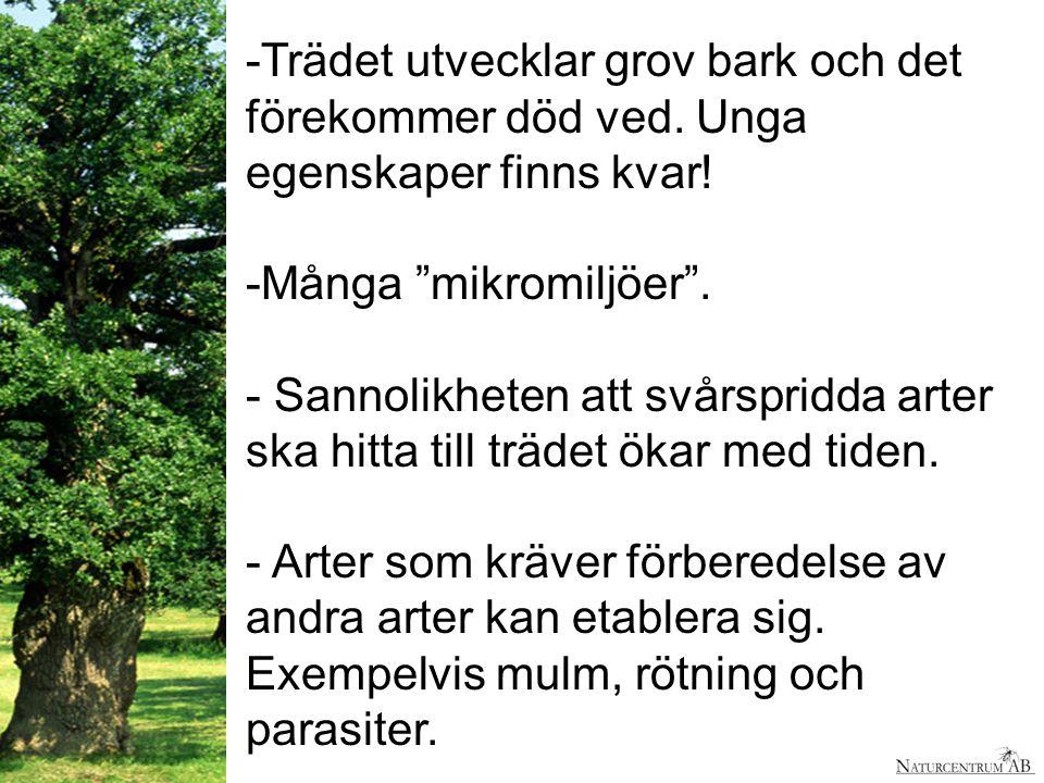 Trädet utvecklar grov bark och det förekommer död ved