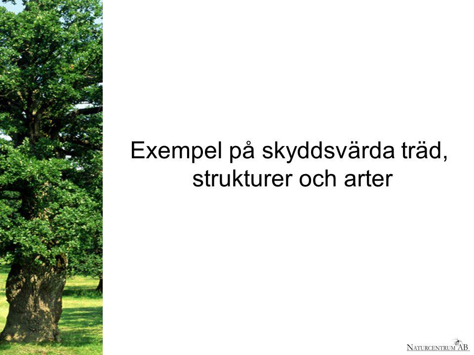 Exempel på skyddsvärda träd,