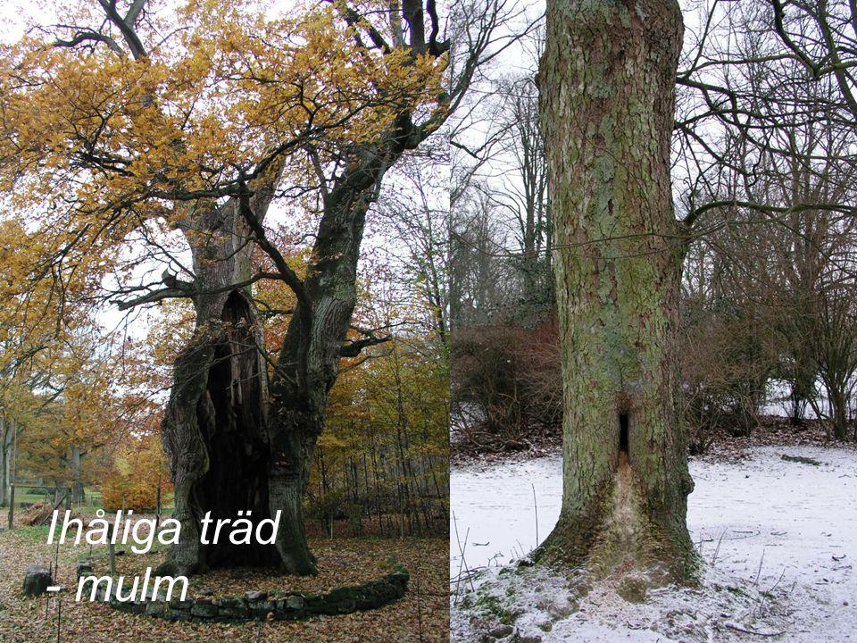 Ihåliga träd - mulm