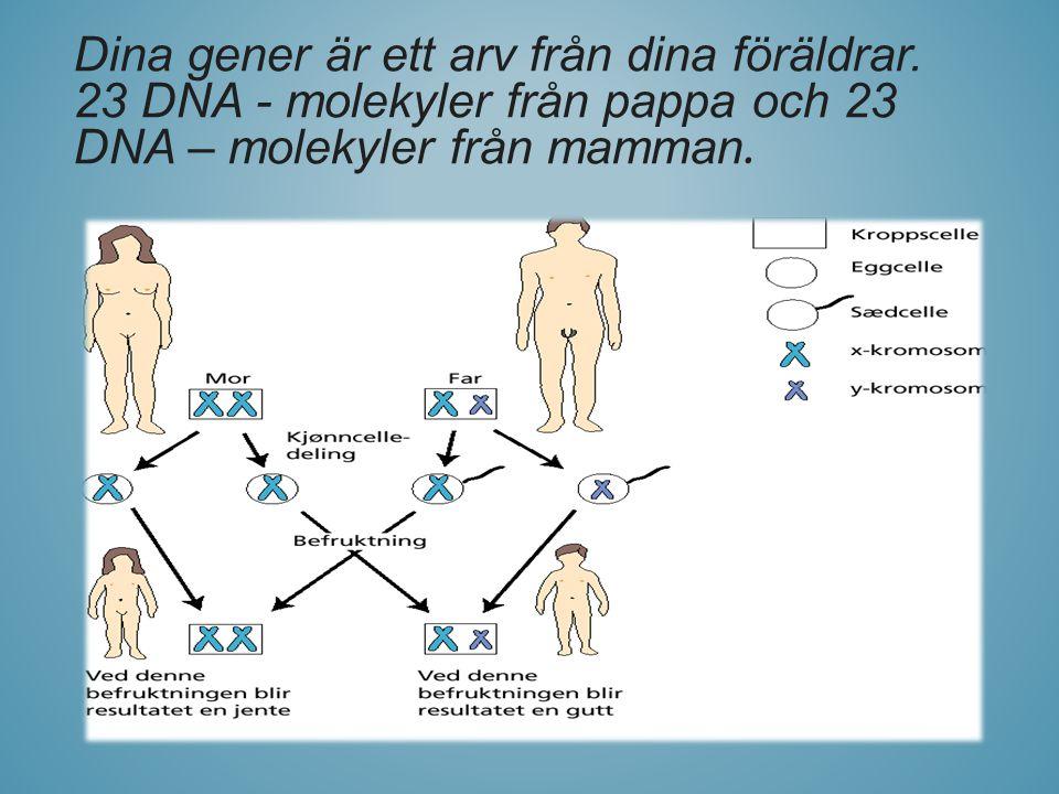 Dina gener är ett arv från dina föräldrar