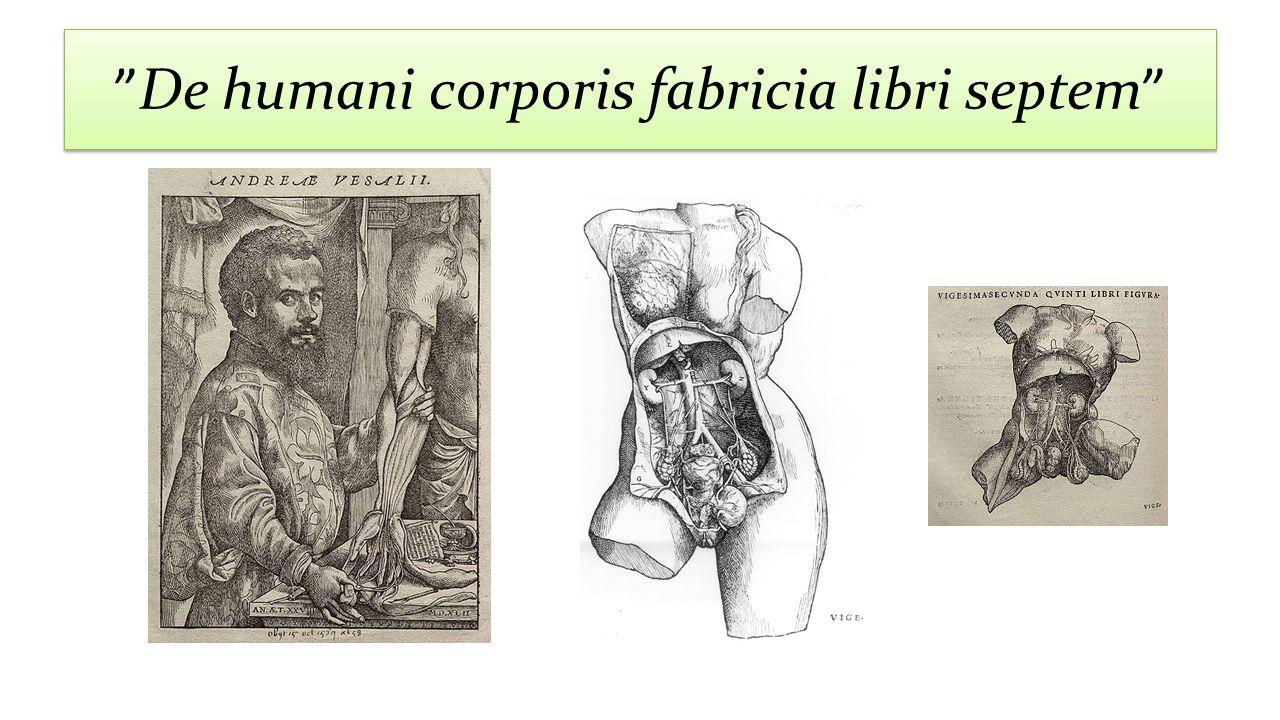 De humani corporis fabricia libri septem