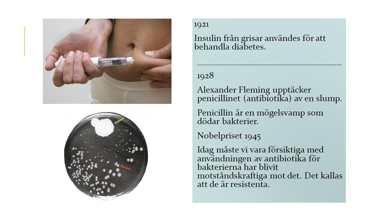 1921 Insulin från grisar användes för att behandla diabetes. ________________________________. 1928.