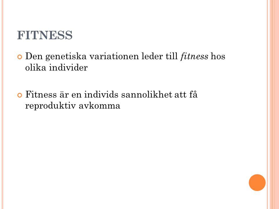 FITNESS Den genetiska variationen leder till fitness hos olika individer.