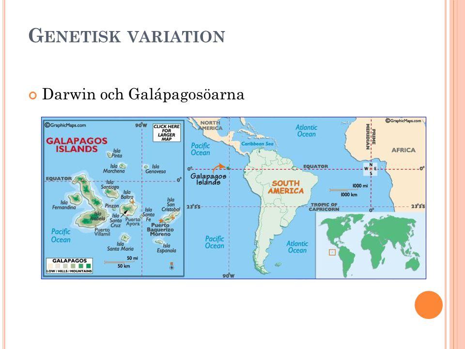 Genetisk variation Darwin och Galápagosöarna