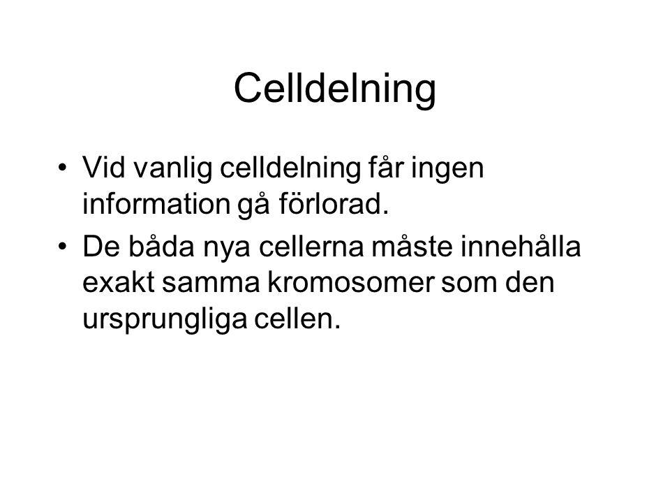 Celldelning Vid vanlig celldelning får ingen information gå förlorad.