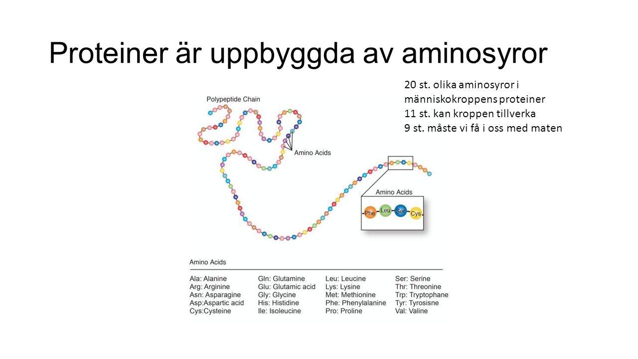 Proteiner är uppbyggda av aminosyror