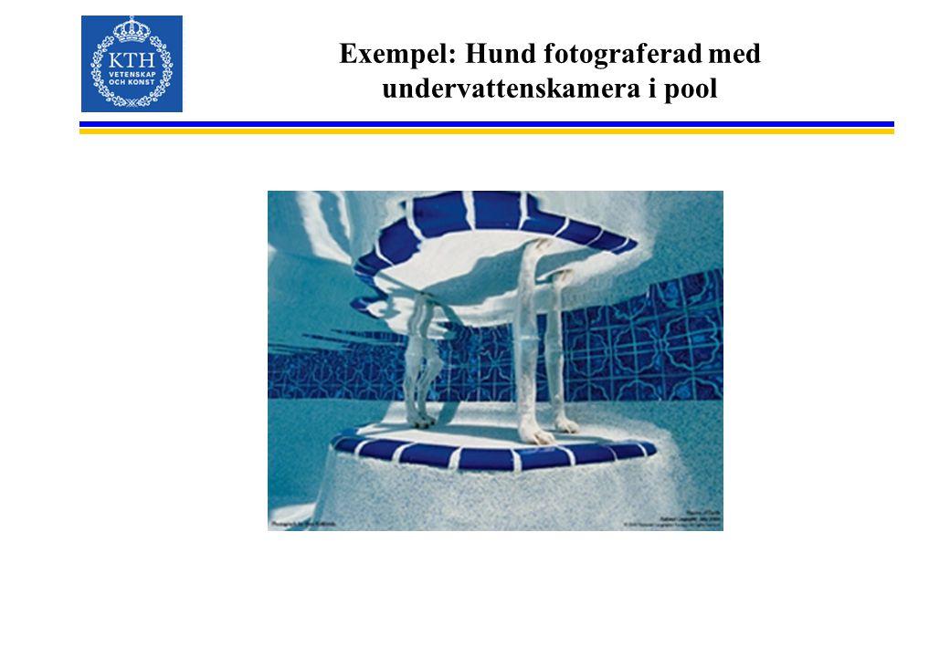 Exempel: Hund fotograferad med undervattenskamera i pool