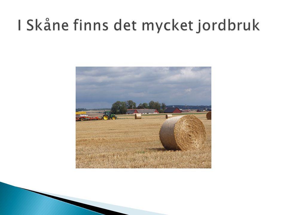 I Skåne finns det mycket jordbruk