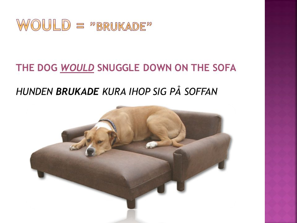 WOULD = BRUKADE THE DOG WOULD SNUGGLE DOWN ON THE SOFA