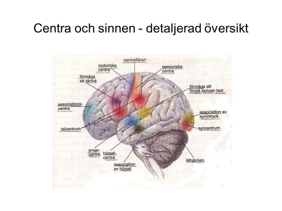 Centra och sinnen - detaljerad översikt