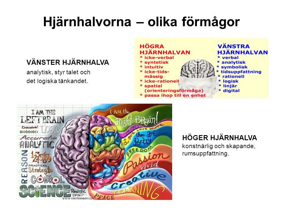 Hjärnhalvorna – olika förmågor
