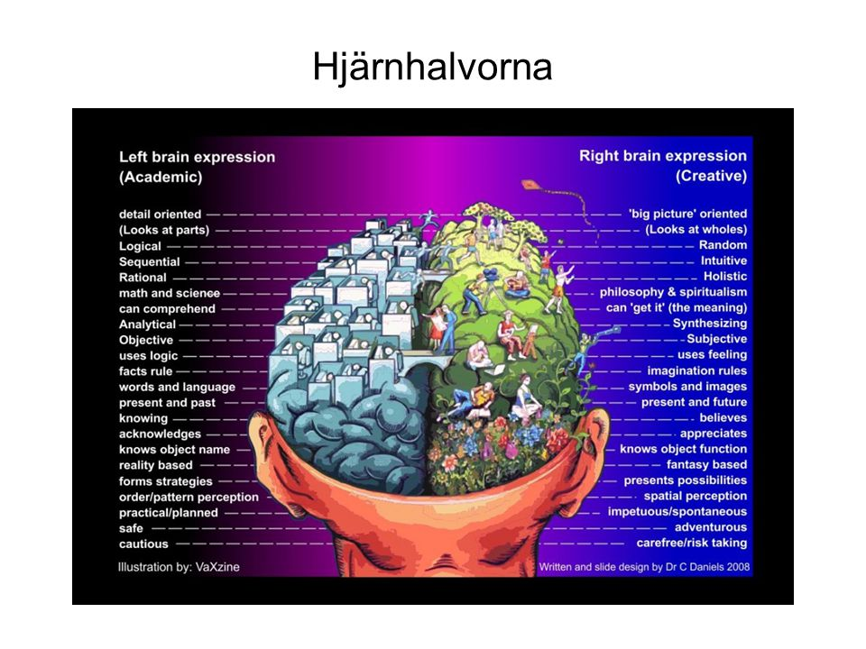 Hjärnhalvorna