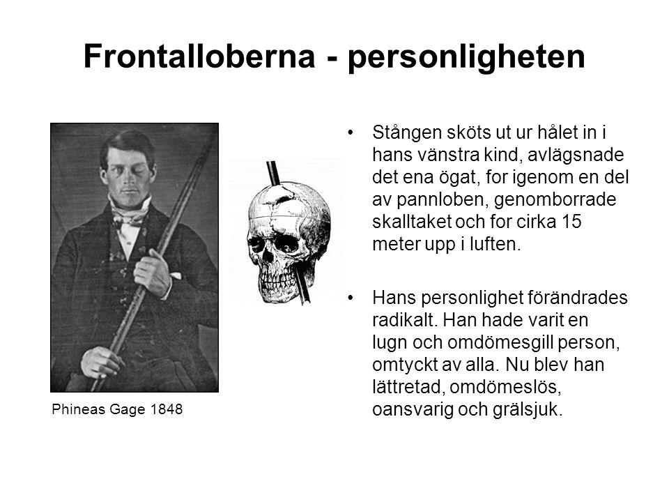 Frontalloberna - personligheten
