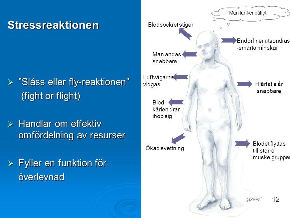 Stressreaktionen Slåss eller fly-reaktionen (fight or flight)
