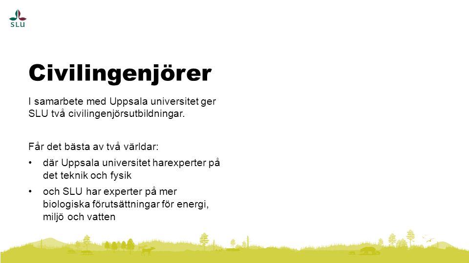Civilingenjörer I samarbete med Uppsala universitet ger SLU två civilingenjörsutbildningar. Får det bästa av två världar: