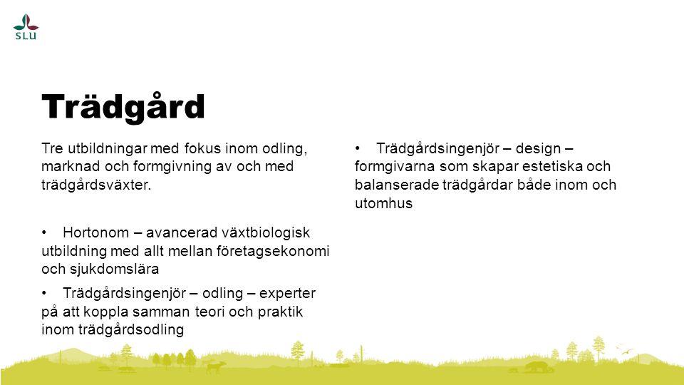 Trädgård Tre utbildningar med fokus inom odling, marknad och formgivning av och med trädgårdsväxter.
